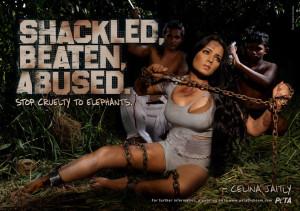 Celina Jaitley ist gegen das Anketten und Misbrauchen von Vierbeinern